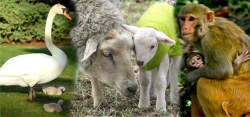 Words Denoting Offsprings Of Animals